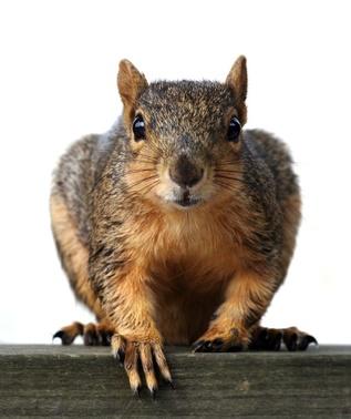 Squirrel Condos