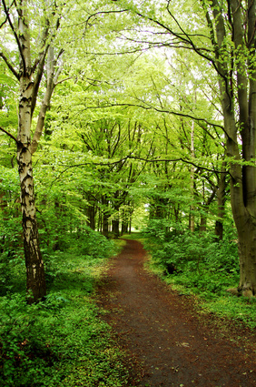trail in a green forest