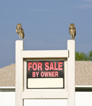 Pair of Owls standing on a For Sale sign.