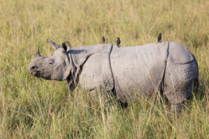 Duplex Sellers As Rare As Black Rhinos