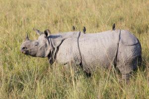 Duplex Sellers As Rare As Black Rhinos